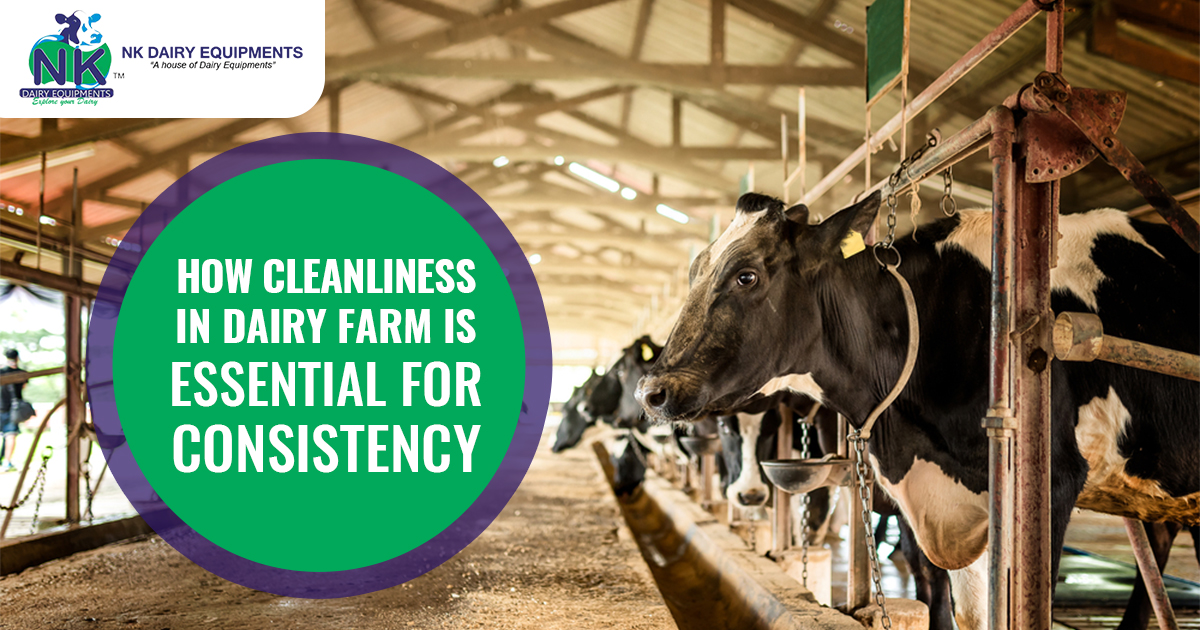 How cleanliness in dairy farm is essential for CONSISTENCY