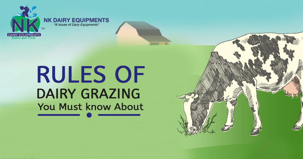 Rules of Dairy Grazing You Must know About